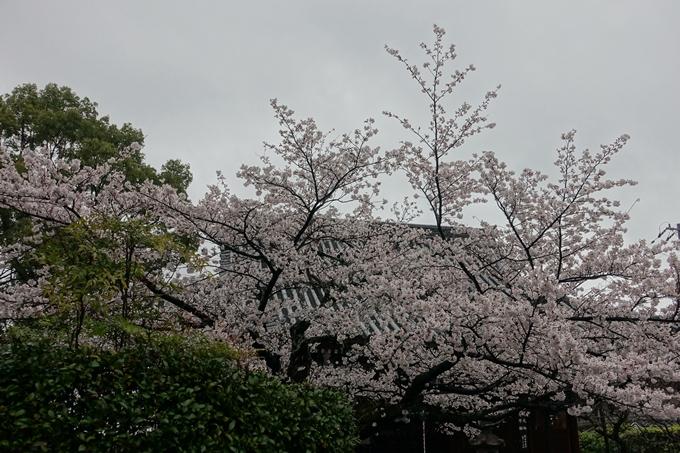 京都_桜_2020_22 真如堂 No10