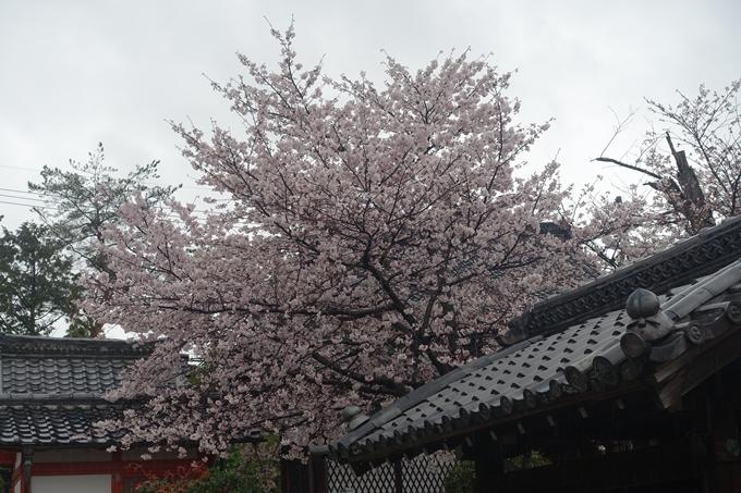京都_桜_2020_23 吒枳尼天 No17