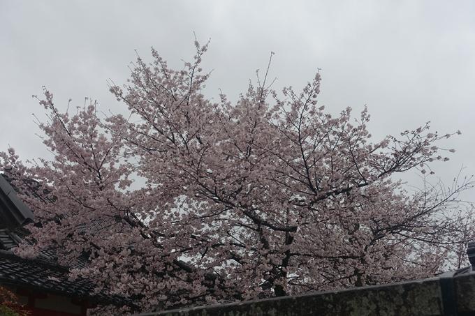 京都_桜_2020_23 吒枳尼天 No18
