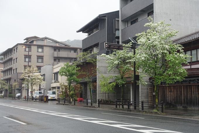 ハナミズキ 三条通 No4