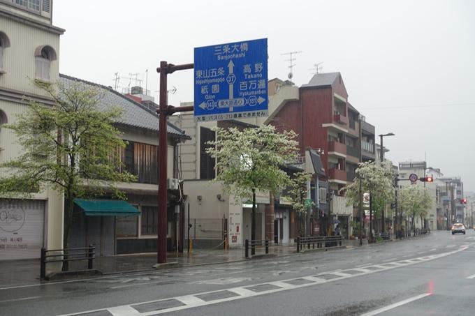 ハナミズキ 三条通 No7