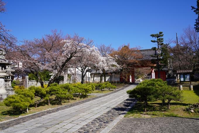 京都_桜_2020_20 真如堂 No3