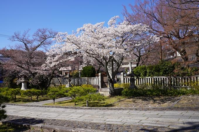 京都_桜_2020_20 真如堂 No6