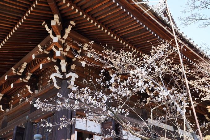 京都_桜_2020_20 真如堂 No14