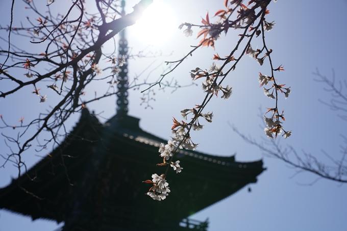 京都_桜_2020_20 真如堂 No21