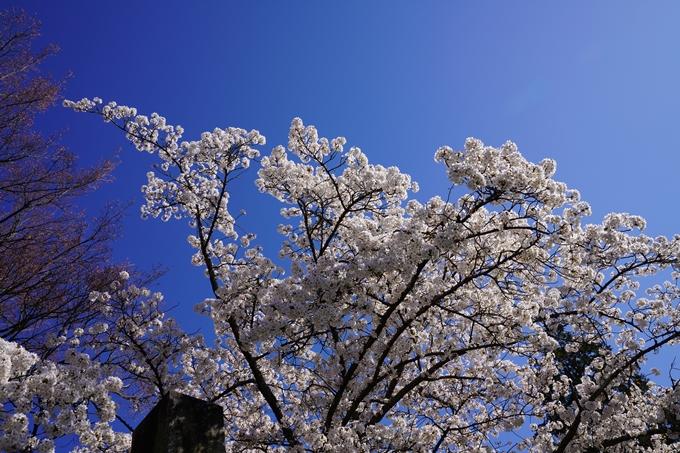 京都_桜_2020_20 真如堂 No24