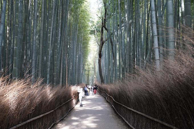 京都_桜_2020_16 嵐山公園 No4