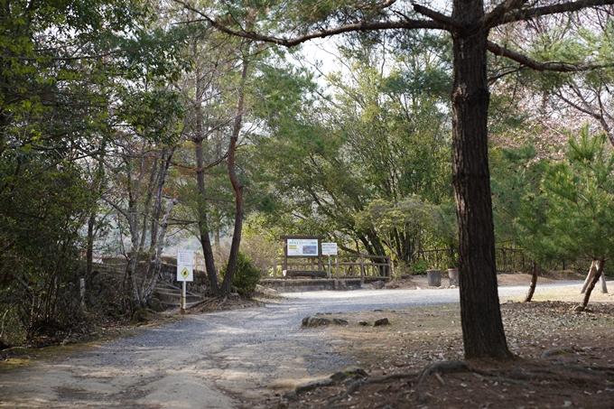 京都_桜_2020_16 嵐山公園 No7