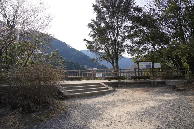 京都_桜_2020_16 嵐山公園 No8