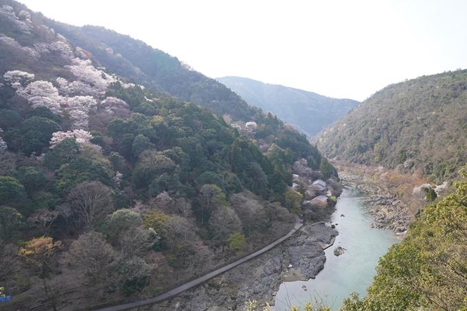京都_桜_2020_16 嵐山公園 No9