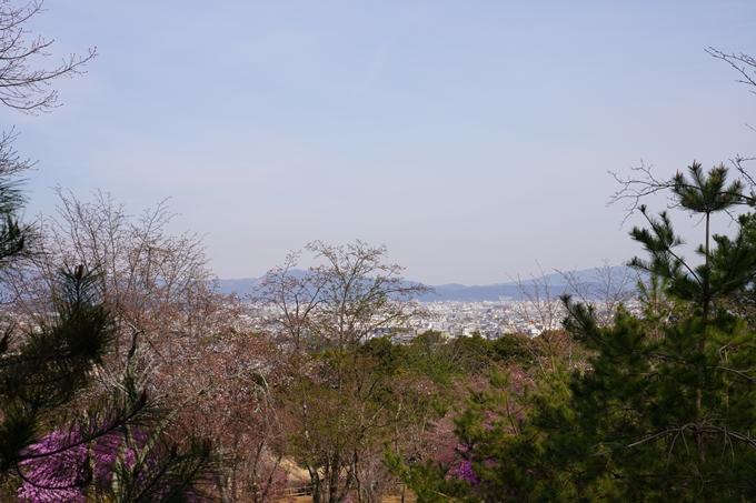 京都_桜_2020_16 嵐山公園 No14