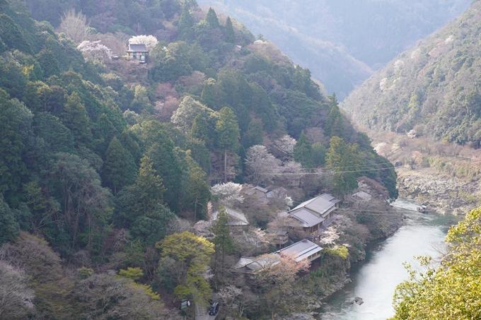 京都_桜_2020_16 嵐山公園 No15