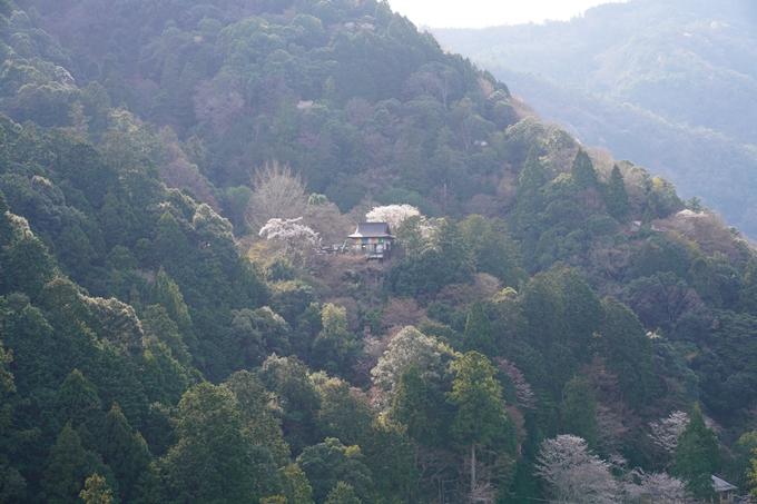京都_桜_2020_16 嵐山公園 No19