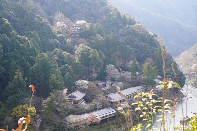 京都_桜_2020_16 嵐山公園 No20