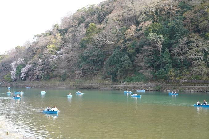 京都_桜_2020_17 嵐山公園 No16