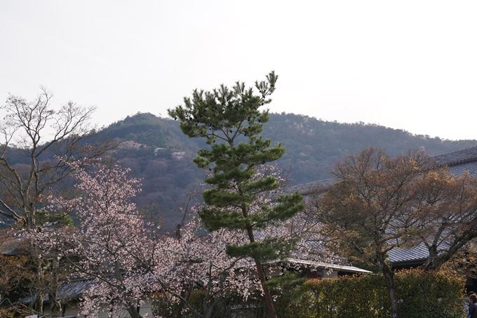 京都_桜_2020_18 嵯峨釈迦堂 No3
