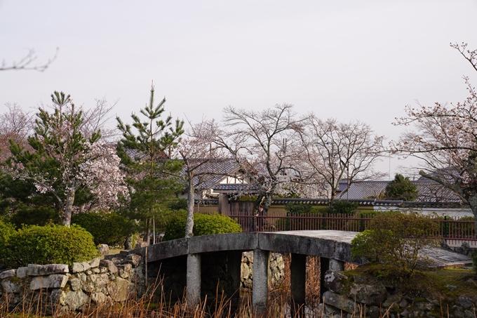 京都_桜_2020_18 嵯峨釈迦堂 No4