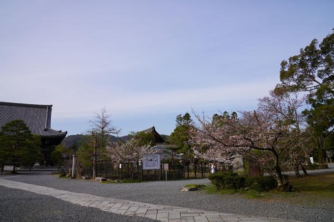 京都_桜_2020_18 嵯峨釈迦堂 No9