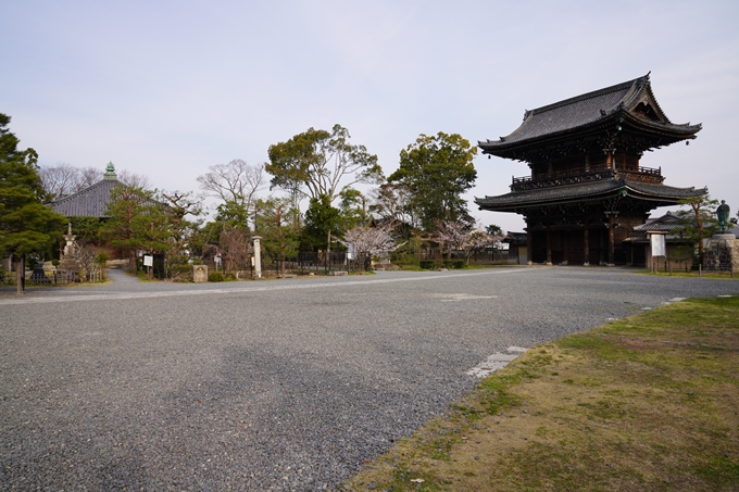 京都_桜_2020_18 嵯峨釈迦堂 No18
