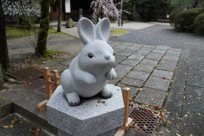 京都_桜_2020_24 岡崎神社 No4