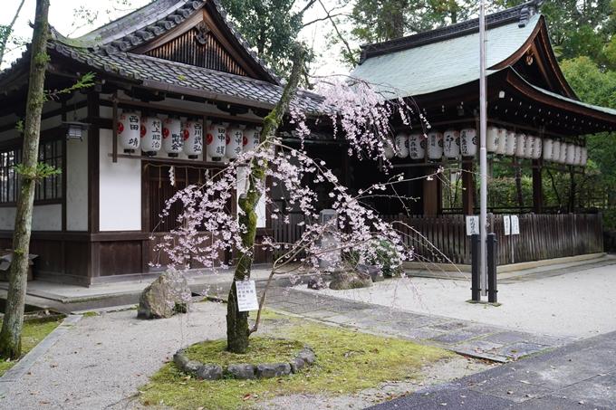 京都_桜_2020_24 岡崎神社 No6
