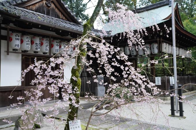 京都_桜_2020_24 岡崎神社 No7