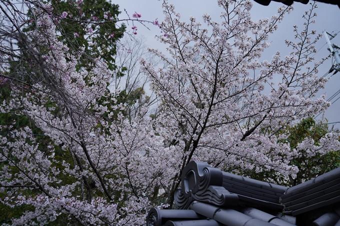 京都_桜_2020_24 岡崎神社 No14