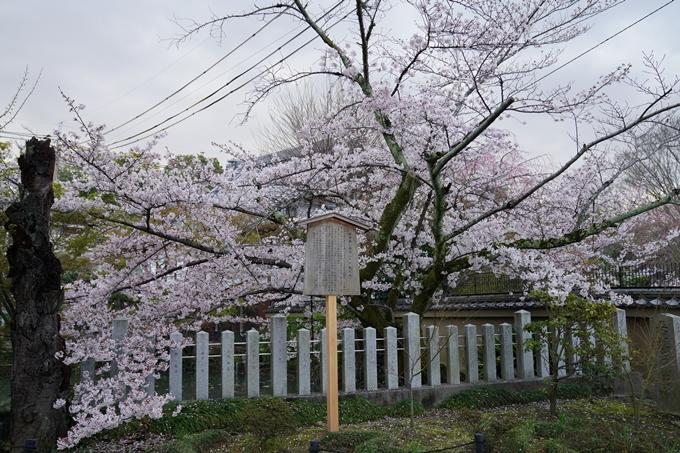 京都_桜_2020_25 金戒光明寺 No9