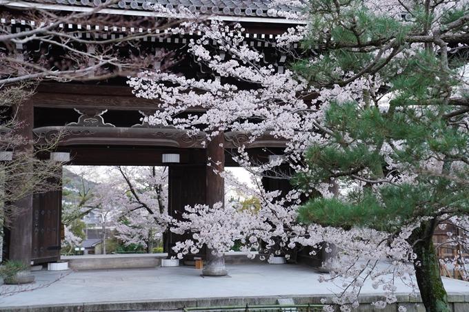 京都_桜_2020_25 金戒光明寺 No11