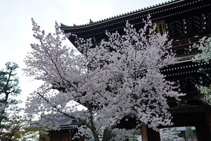 京都_桜_2020_25 金戒光明寺 No14