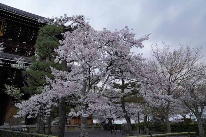 京都_桜_2020_25 金戒光明寺 No16