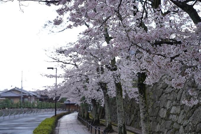 京都_桜_2020_25 金戒光明寺 No18