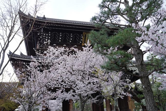 京都_桜_2020_25 金戒光明寺 No19
