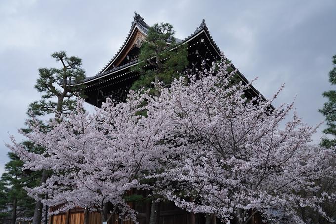京都_桜_2020_25 金戒光明寺 No21