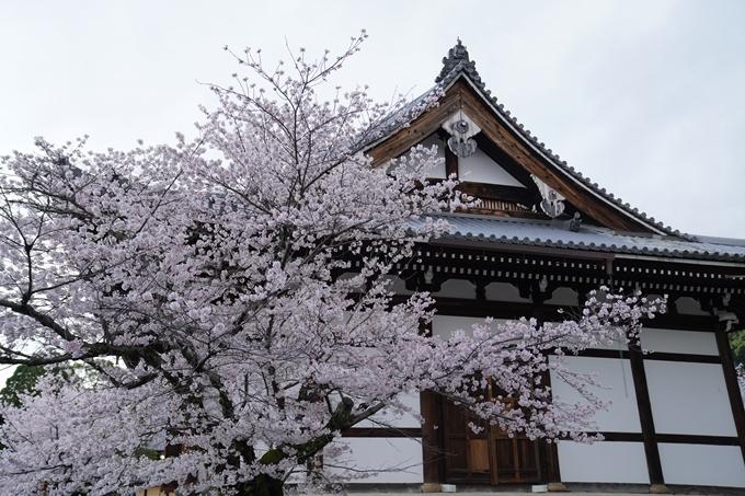 京都_桜_2020_25 金戒光明寺 No26