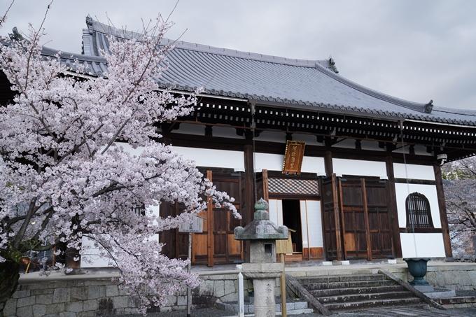 京都_桜_2020_25 金戒光明寺 No27