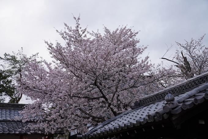 京都_桜_2020_26 真如堂前 No6