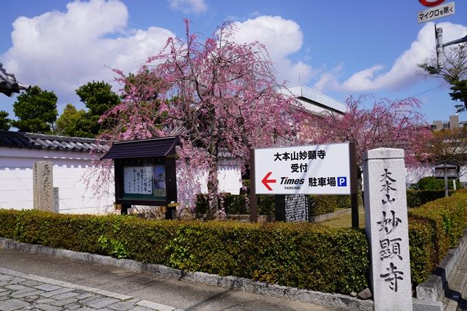京都_桜_2020_27 妙顕寺 No2