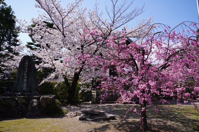 京都_桜_2020_27 妙顕寺 No6