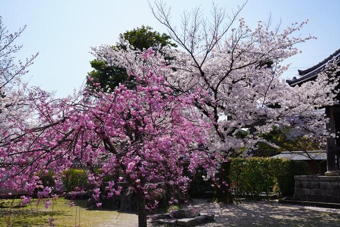 京都_桜_2020_27 妙顕寺 No7