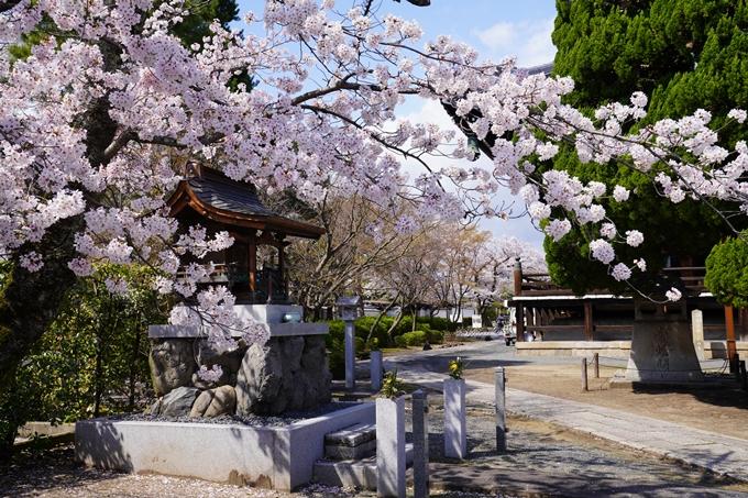 京都_桜_2020_27 妙顕寺 No8