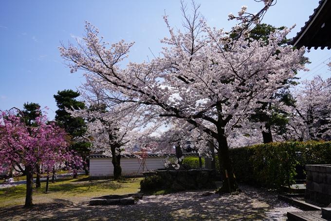 京都_桜_2020_27 妙顕寺 No9