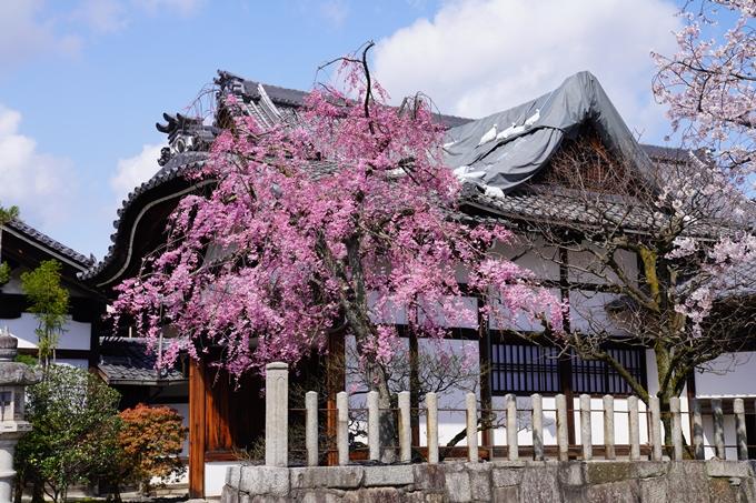 京都_桜_2020_27 妙顕寺 No10