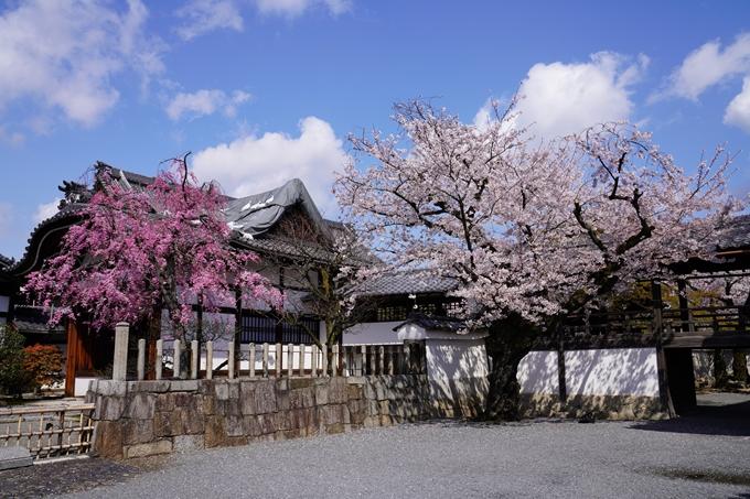 京都_桜_2020_27 妙顕寺 No11