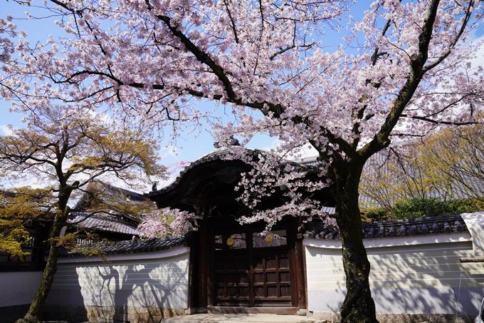 京都_桜_2020_27 妙顕寺 No14