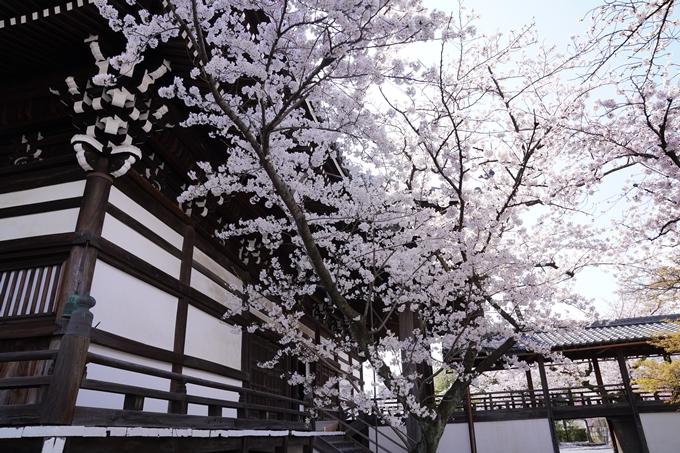 京都_桜_2020_27 妙顕寺 No15