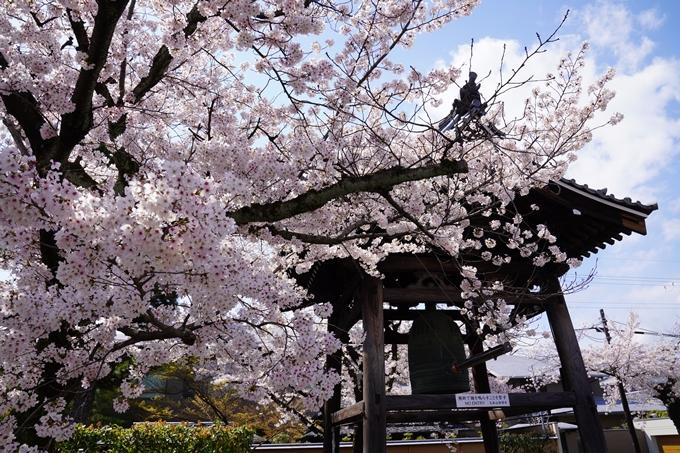 京都_桜_2020_27 妙顕寺 No22