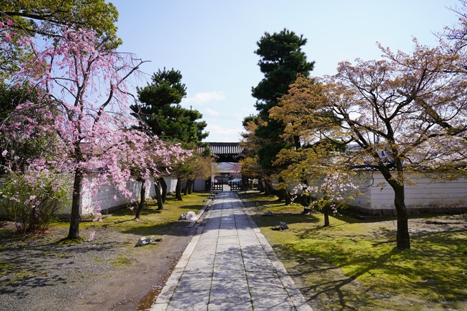 京都_桜_2020_27 妙顕寺 No24