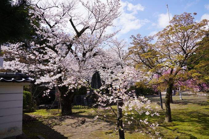 京都_桜_2020_27 妙顕寺 No25