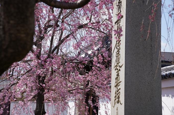京都_桜_2020_27 妙顕寺 No26